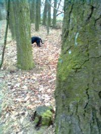 Najdi psa