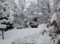 white Christmas in my front yard. 2014