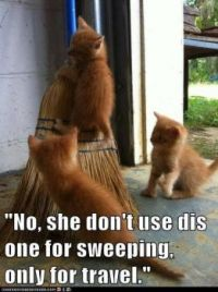 Kittens with broom