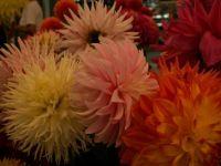 Theme - colors of autumn