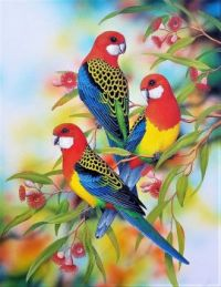 Pretty Parrots Series - Eastern Rosellas