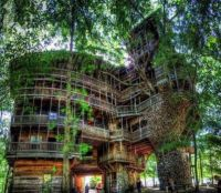 Treehouse Anyone?