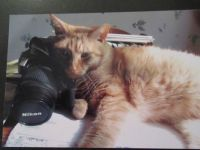 Photographer's Assistant