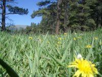 Meadow in Colorado