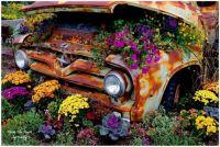 Vintage Car Flowers