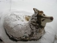 Dog in a blanket of snow.