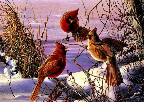Cardinals in dry brush and snow