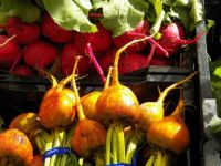 Beets in reds and yellows