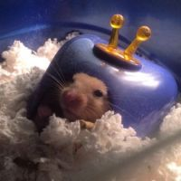 Crackers the hamster