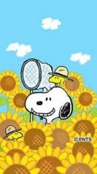 May you have sunflower day!