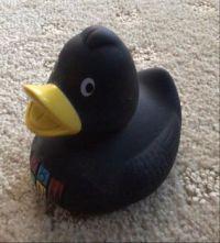 Koln Duck