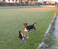 Spain. Lets play! (See how the early morning sun shines on the dogs! and buildings)
