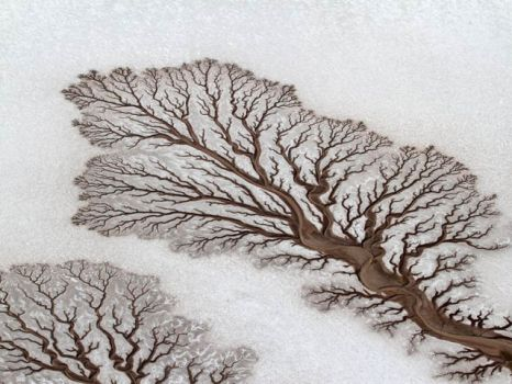 Fractal dried desert river beds