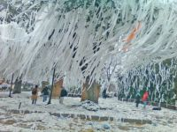 Toomer's Corner after an Auburn football win.