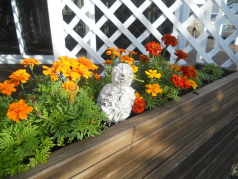 Marigolds in planter