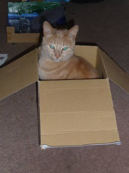 Charlie in a box!