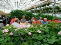 Our geraniumclub in a nursery of geraniums.