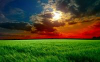 Red sunset field