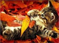 Hunter kitty is ready for fall...