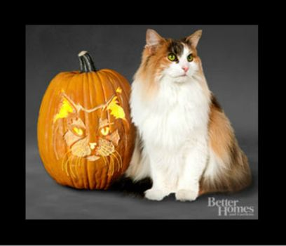 Theme: Halloween  Norwegian Forest Cat Jack O'Lantern