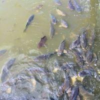 carp-Taylorsville-Lake-KY