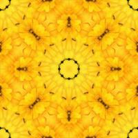kaleidoscope 76 the yellow challenge and some ants :) medium