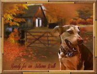 autumn wakj
