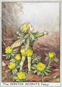 The Winter Aconite Fairy