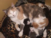 mommy and kittens 1
