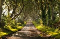 nature Dark-Hedges-along-Bregagh-Road-in-Northern-Ireland