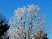 Hoar frost this morning