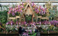 Orchid Festival in Kew
