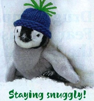 Fashion Snuggly Hat on Penguin