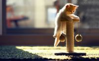 cute-kitten-playing.