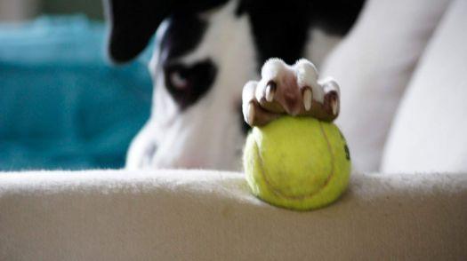Landi and her ball