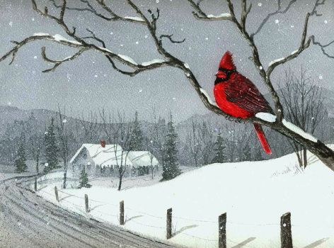 red cardinal gray snow 300 pieces jigsaw puzzle