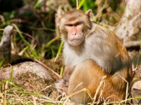 There's an island full of wild monkeys off the coast of South Carolina called Morgan Island, and it's not open to humans.