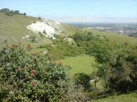 Willingdon Chalk Pit, South Downs National Park