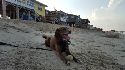 Louis Goes to the Beach!