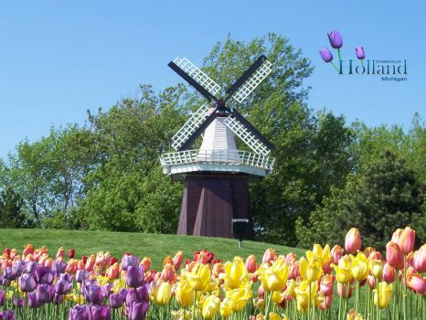 Tulips Blooming near Windmill in Holland Michigan
