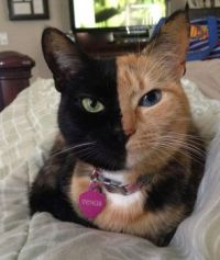 The World's Most Interesting Cat Face?