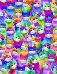 MASKED KITTY CATS