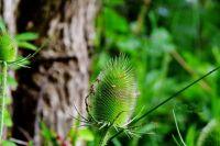 Pretty Prickly