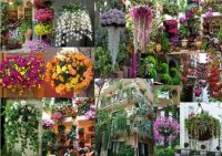 Beautiful and Unusual Flowers Hanging Baskets