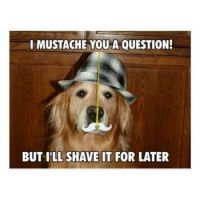 I mustached you a question