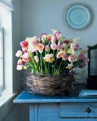 tulipnest