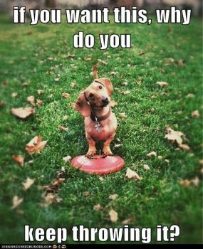 The dog asks a logical question...the human doesn't have a logical answer!