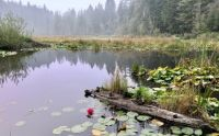 A pond in Stanley Park Vancouver Canada
