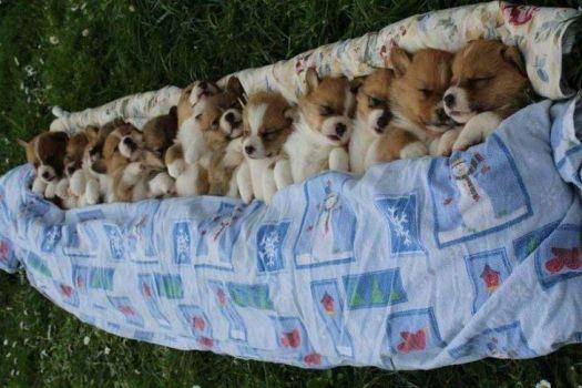Bunch of Pups
