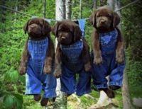 Denim clad Puppies